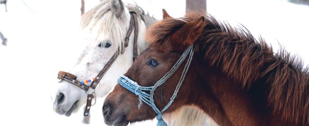 konje